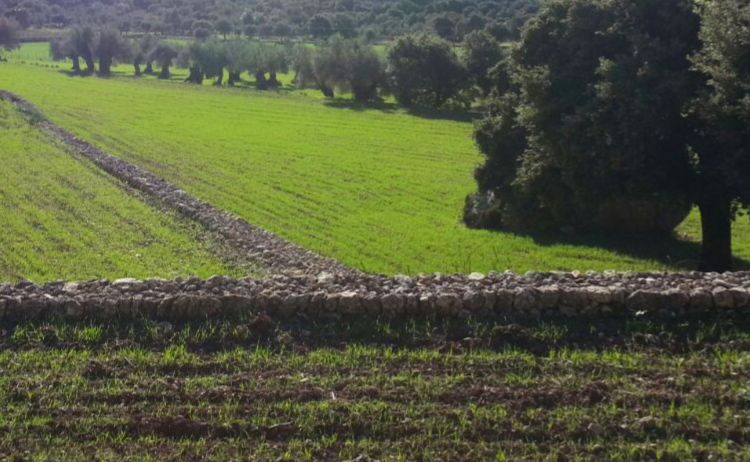 Los Perez Farm | La Maitexa